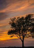 Árvore solitária no por do sol imagem de stock