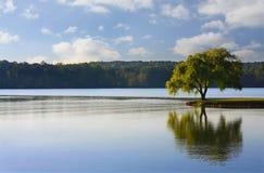 Árvore solitária no rio Fotografia de Stock