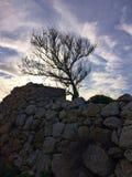 Árvore solitária, parede de pedra, céu temperamental Foto de Stock