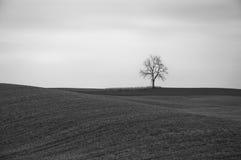 Árvore solitária preto e branco Fotos de Stock Royalty Free