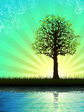 Árvore solitária que reflete na água Imagens de Stock Royalty Free