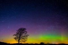 Árvore solitária sob Aurora Borealis Fotografia de Stock Royalty Free