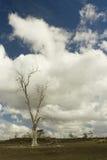 Árvore solitária sob o céu nebuloso fotos de stock