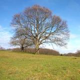Árvore solitário Imagens de Stock Royalty Free