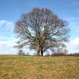 Árvore solitário Foto de Stock Royalty Free