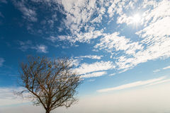 Árvore solitário 2 Imagens de Stock Royalty Free