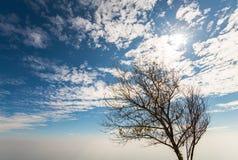 Árvore solitário 3 Fotografia de Stock