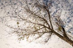 Árvore solitário 6 Fotos de Stock