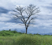 Árvore solitário em um campo aberto imagens de stock