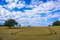 Árvore solitário em um campo de cereal imagens de stock