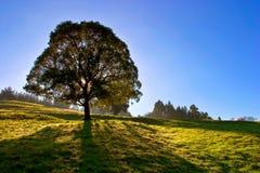 Árvore solitário no céu azul fotos de stock royalty free