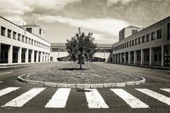 Árvore solitário no meio da construção moderna Imagens de Stock