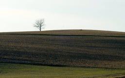 Árvore solitário solitária no campo no horizonte Imagem de Stock Royalty Free