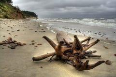 Árvore soprada pelo mar. Fotos de Stock Royalty Free