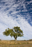 Árvore sozinha Fotografia de Stock