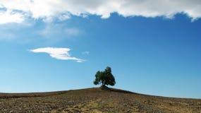 Árvore sozinha foto de stock