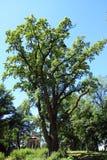 Árvore sozinha Fotos de Stock