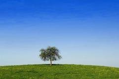 Árvore sozinha Fotografia de Stock Royalty Free