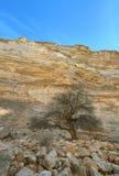 Árvore sozinha Imagens de Stock Royalty Free