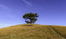 Árvore sozinha 2 Imagem de Stock Royalty Free