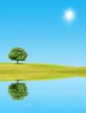 Árvore sozinha ilustração do vetor