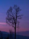 Árvore sozinha Imagem de Stock