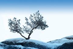 A árvore sozinha cresce sobre o céu azul na pedra Fotografia de Stock