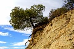 Árvore sozinha na rocha Imagens de Stock