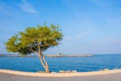 Árvore sozinha na rua no mar azul e no céu azul Imagens de Stock Royalty Free