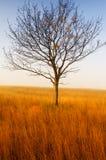 Árvore sozinha no campo com grama seca foto de stock royalty free
