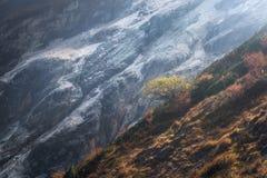 Árvore sozinha no montanhês contra montanhas no por do sol Imagem de Stock Royalty Free