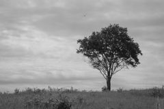 Árvore sozinha sobre o céu nebuloso Fotos de Stock