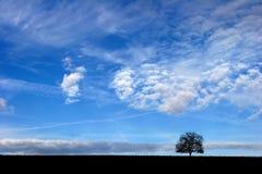 Árvore sozinho Imagem de Stock Royalty Free
