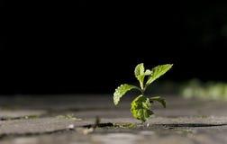 Árvore Sprouting Fotos de Stock Royalty Free