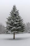 Árvore Spruce na tempestade da neve do inverno Foto de Stock Royalty Free