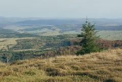 Árvore spruce sozinha nas montanhas Imagem de Stock