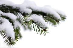 Árvore spruce verde do Natal Imagem de Stock Royalty Free