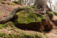 Árvore, Suíça saxão Foto de Stock Royalty Free