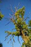 Árvore sulcado foto de stock royalty free