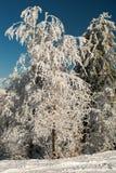 Árvore surpreendente da neve imagem de stock