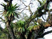 Árvore surpreendente imagens de stock royalty free
