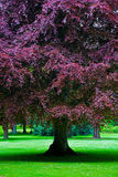 Árvore surpreendente no parque Imagem de Stock