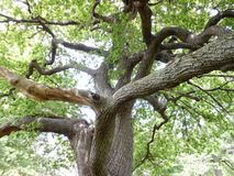 Árvore Tangled Foto de Stock Royalty Free