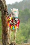Cavalo decorado colorido engatado à árvore fotos de stock