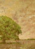 Árvore Textured no campo fotografia de stock royalty free