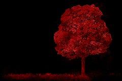 Árvore tirada vermelha do esboço Fotos de Stock Royalty Free