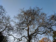 Árvore torcida desencapada contra um céu azul fotografia de stock