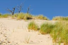 Árvore três que cresce nas dunas Foto de Stock Royalty Free