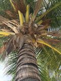 Árvore tropica na ilha de Kurumba, fotos de stock royalty free