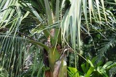 Árvore tropical Imagem de Stock Royalty Free